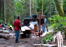 Milling a maple log